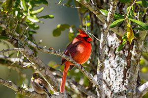Bird-Friendly Habitat Guide