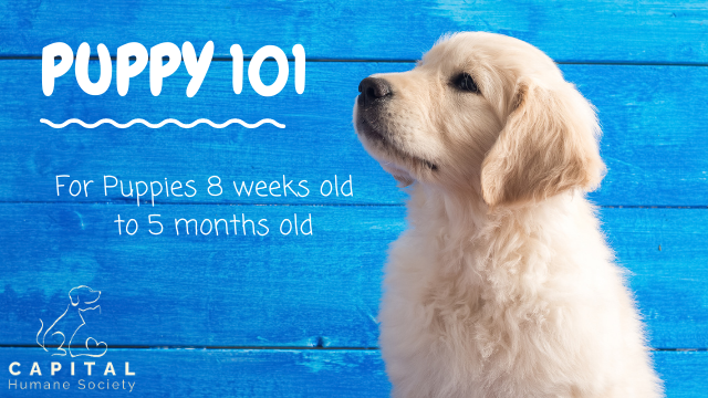 Click here to view the Puppy 101 Outline!