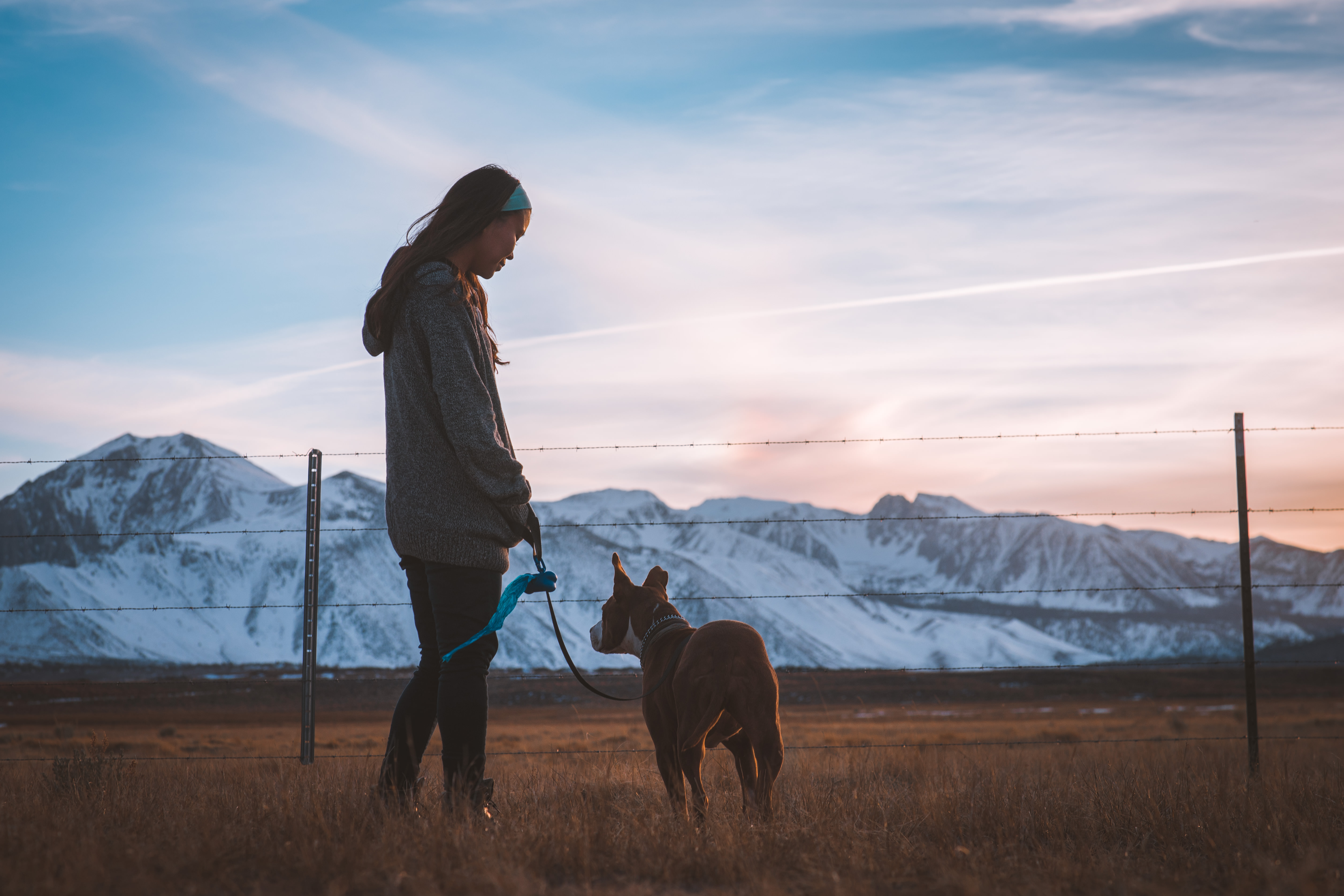 Discover the many benefits of the human-animal bond