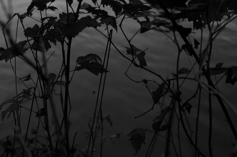 Ward Lake 13, Salmonberry Silhouette