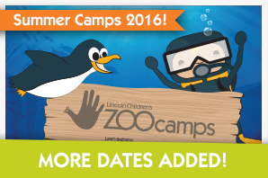 Summer Camps 2016 - More Dates