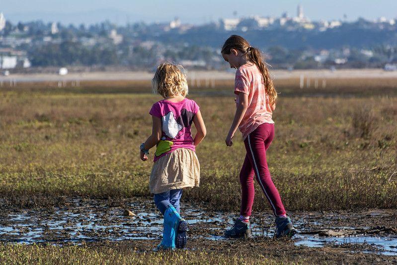 Wander the Wetlands