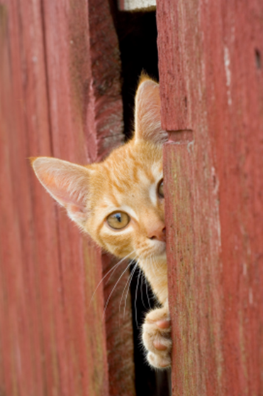 Outdoor Cats: Friendly or Feral?