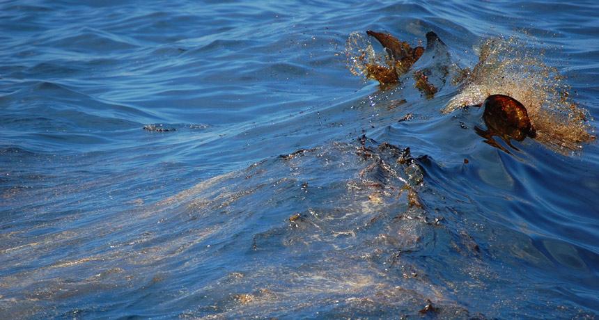Sunshine is making Deepwater Horizon oil stick around
