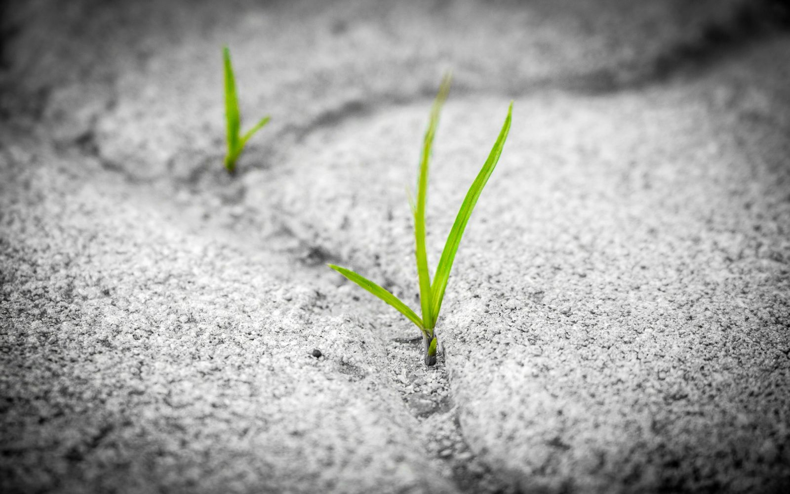 green plants sprouting from gray rocky surface
