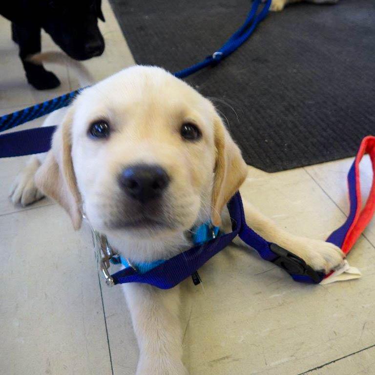 New Puppies at CTF South 07/2019