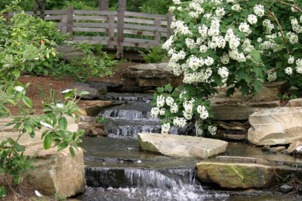 hydrangea waterfall aldridge gardens