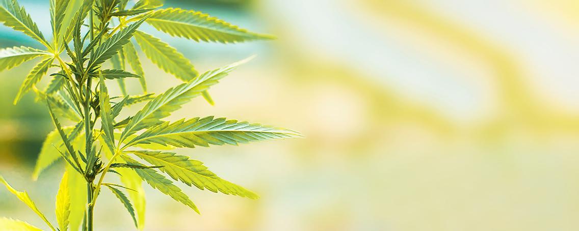 CBD oils and workplace drug testing