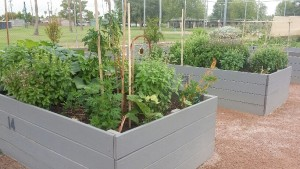 CLICK HERE For information on Garden Plot Rentals