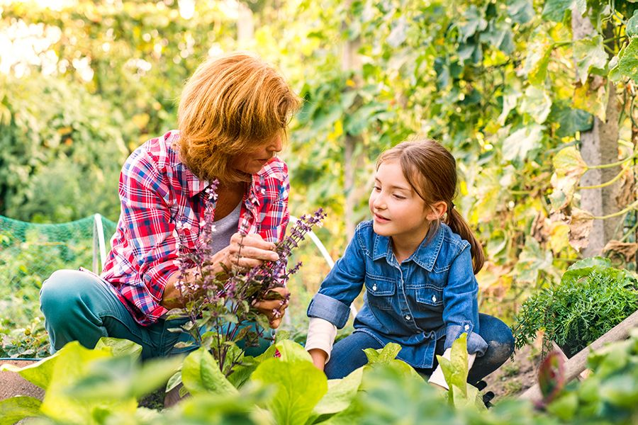 Older adult, female, crouching in the garden with her young granddaughter and showing her a plant