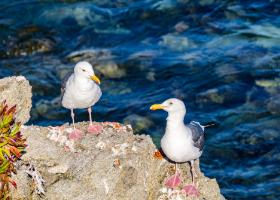 Seabirds & Shorebirds