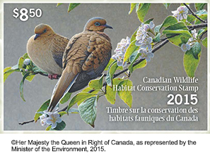 Mourning Doves Featured on 2015 Canadian Conservation Stamp