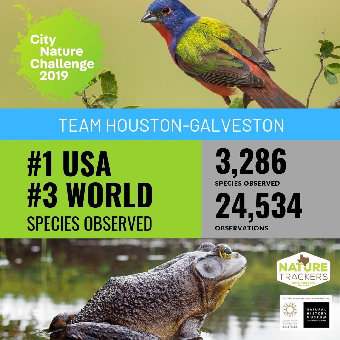 Houston 1st in City Nature Challenge