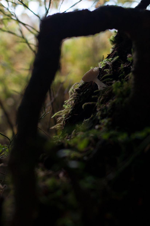 Ward Lake 20, Mushroom Through Root Window