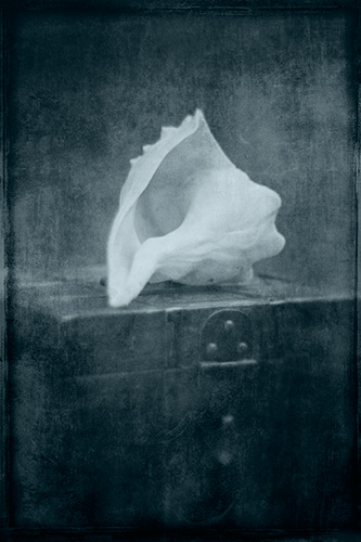 "Conch on Chest, photographic print, 20"" x 30"""