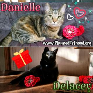 Danielle adopted 021518