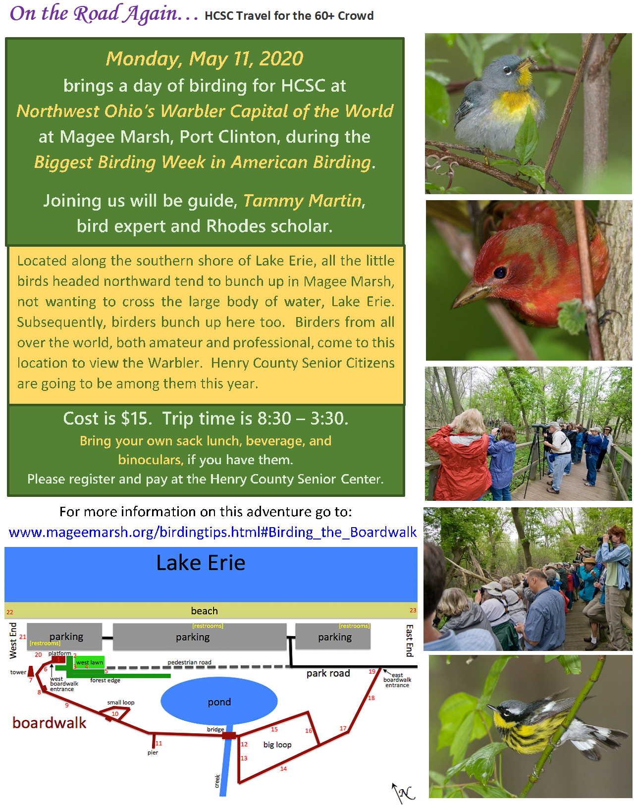 May 11 Magee Marsh Birding