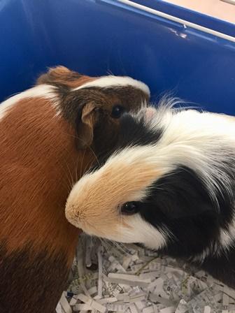 Gwen & Miss Piggy