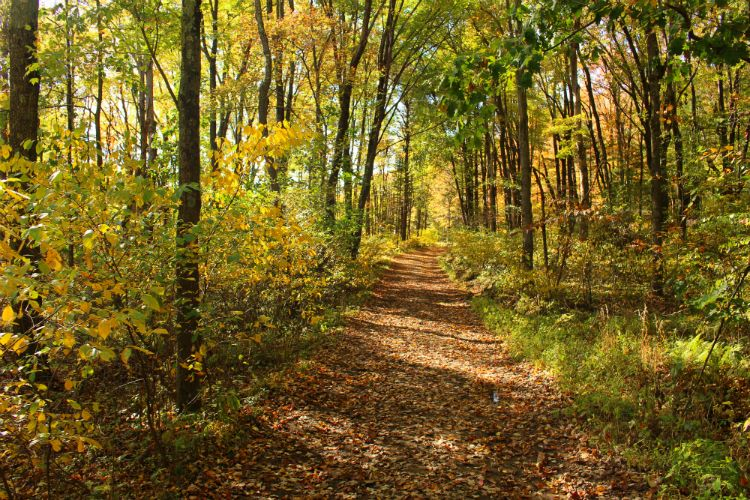 Road to Upper Lake Fall