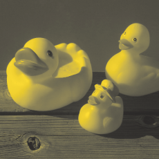 Ugly Ducklings: A National Campaign to Reduce Bullying and Harassment of LGBTQ Youth