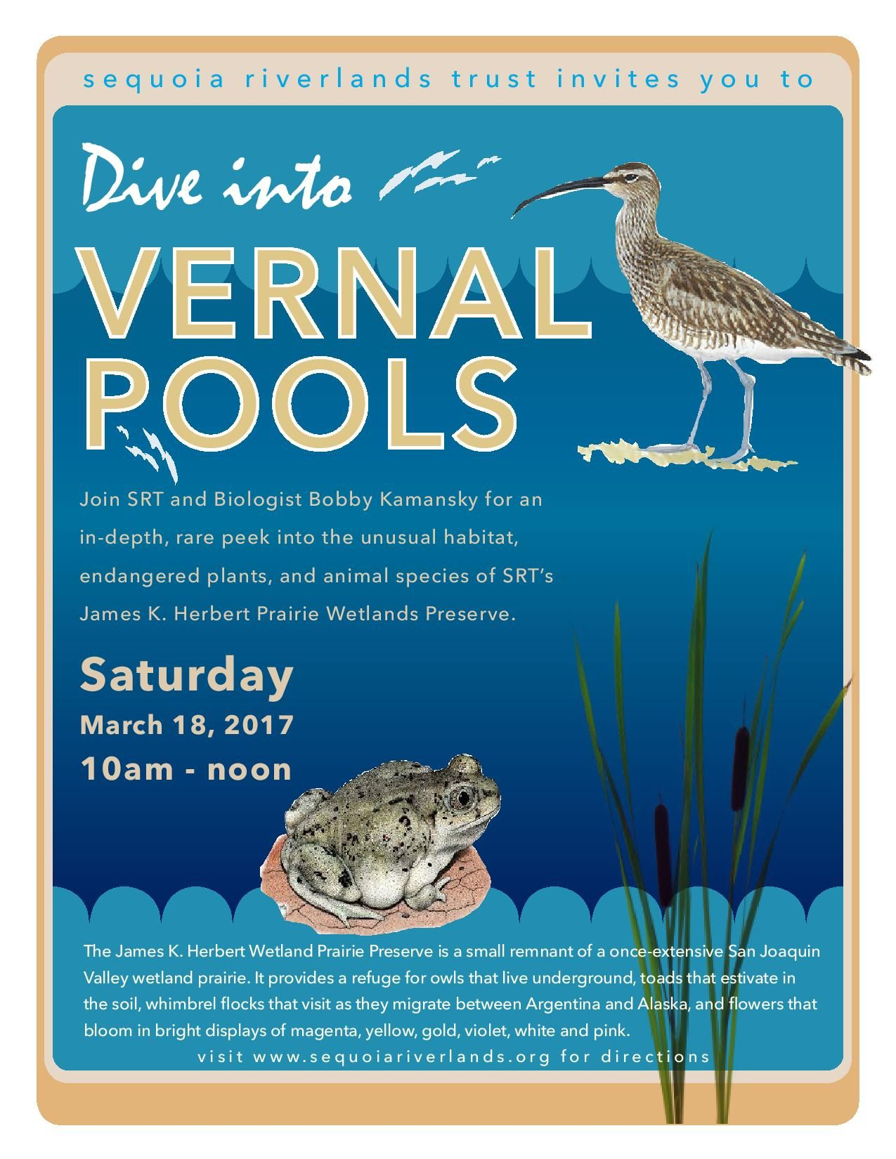 Dive into Spring at Herbert Wetland Preserve