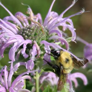 Central Community College Pollinator Garden