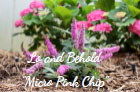 Lo and Behold Micro Pink Chip