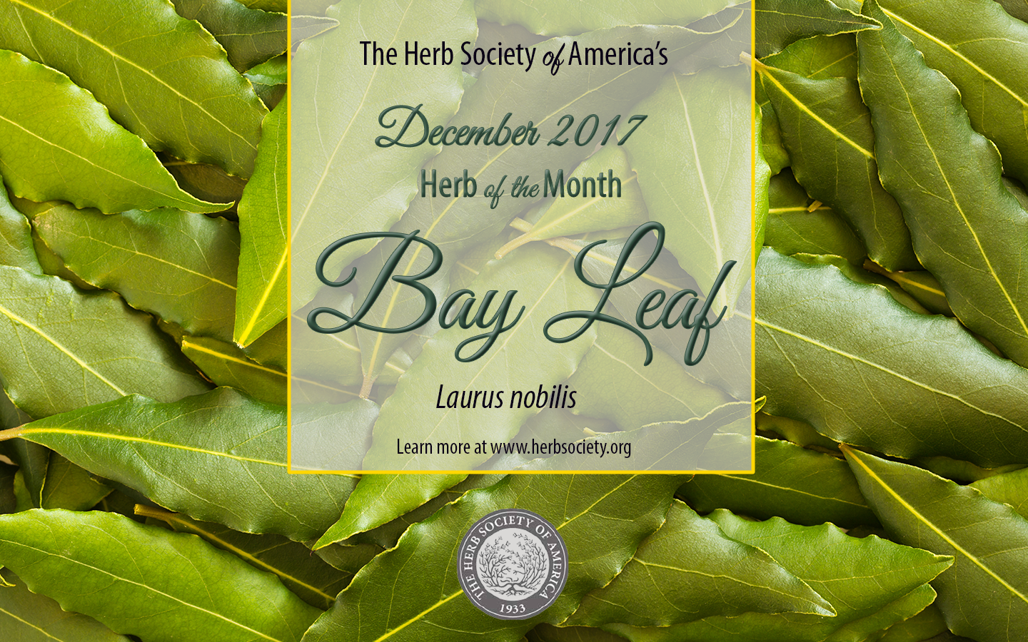 Bay Leaf Spotlight