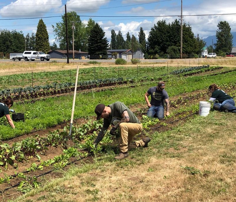 Volunteer Drop In Day @ Growing Veterans Lynden Farm