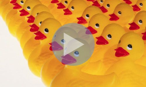 Getting Your Ducks in a Row: Legal Planning
