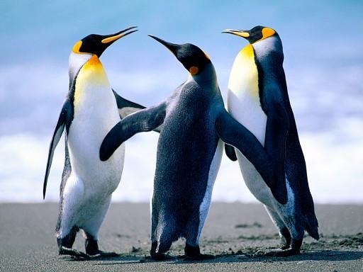 Polk Penguin Conservation Center
