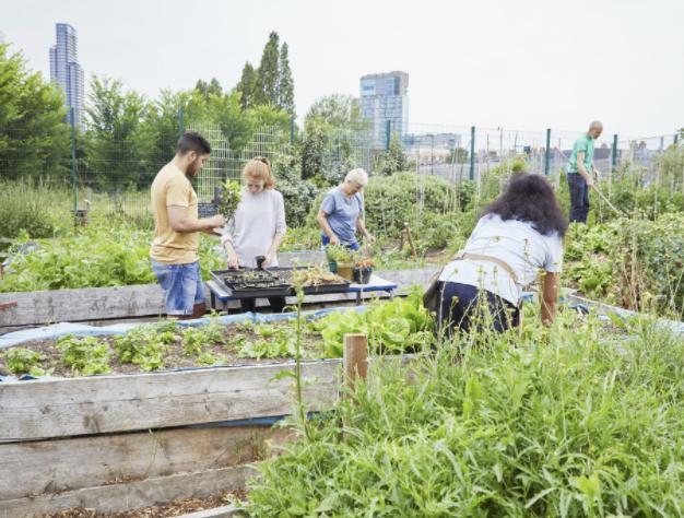 Community Gardens panel