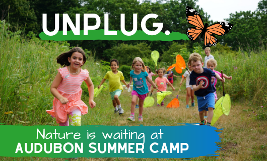 Audubon Summer Camp