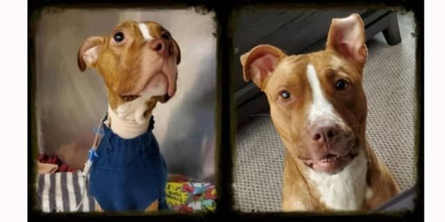 'Beacon Of Hope': Starving Dog Wandering Streets Of Paterson Finds Forever Home (Daily Voice)