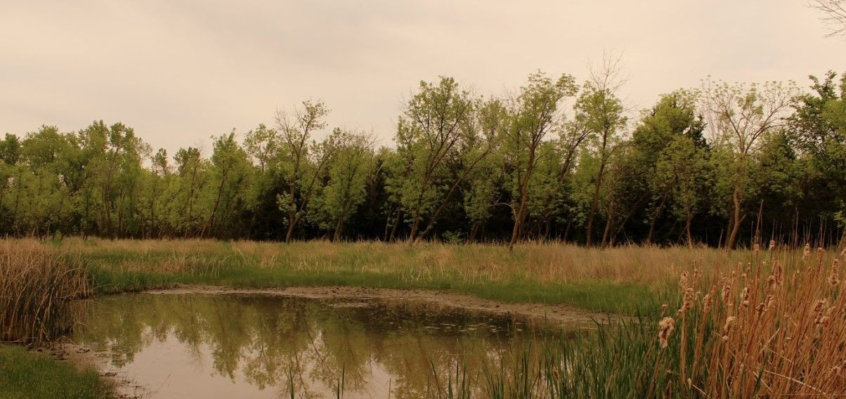 Wilderness Park and Ecosystem Services