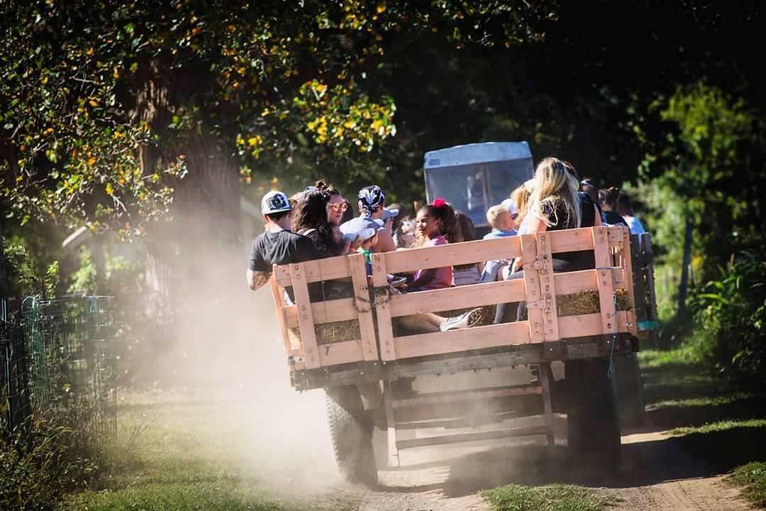 Group Hayrides, Bonfires, and Corn Maze Adventures