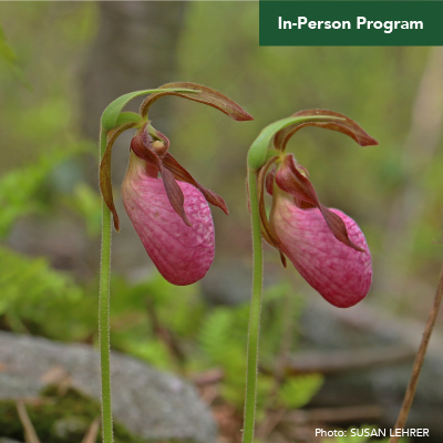 Hike and Draw Seasonal Workshop: Lady's Slippers and More!