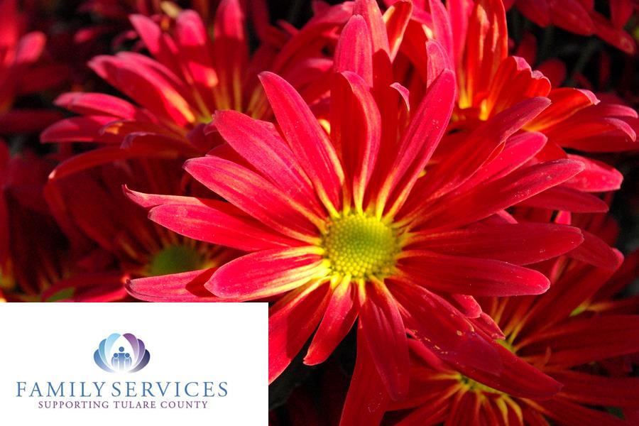 Thanks for Giving Chrysanthemum Sale