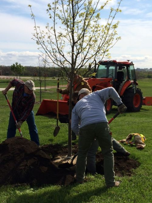 Arbor Day Celebrations
