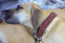 Many thanks to Lin Gardiner for her WONDERFUL collars and for making this opportunity available to us