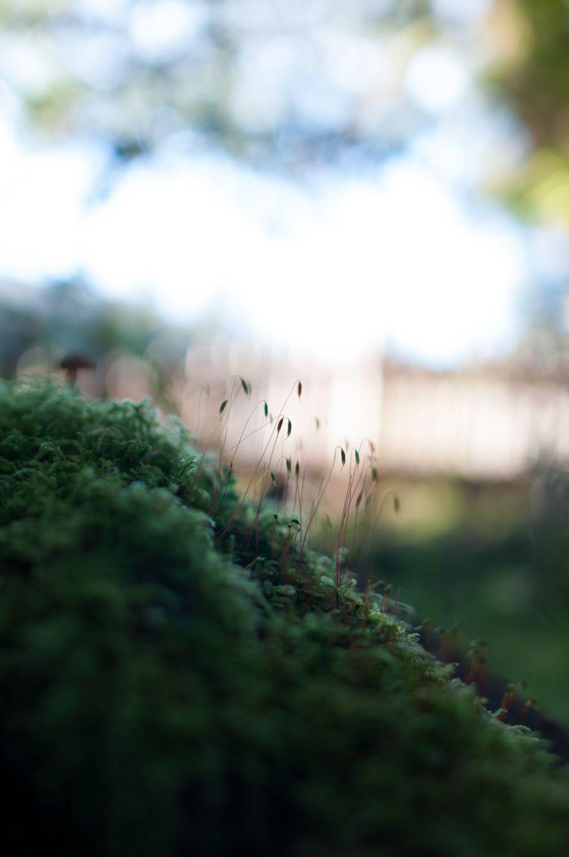 Ward Lake 16, Moss Sporophyte