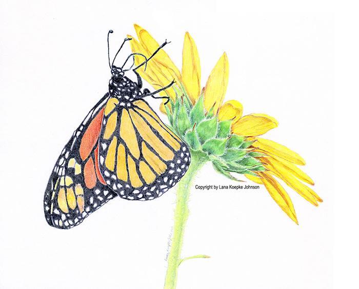 CE: Brownbag on Botanical Illustration