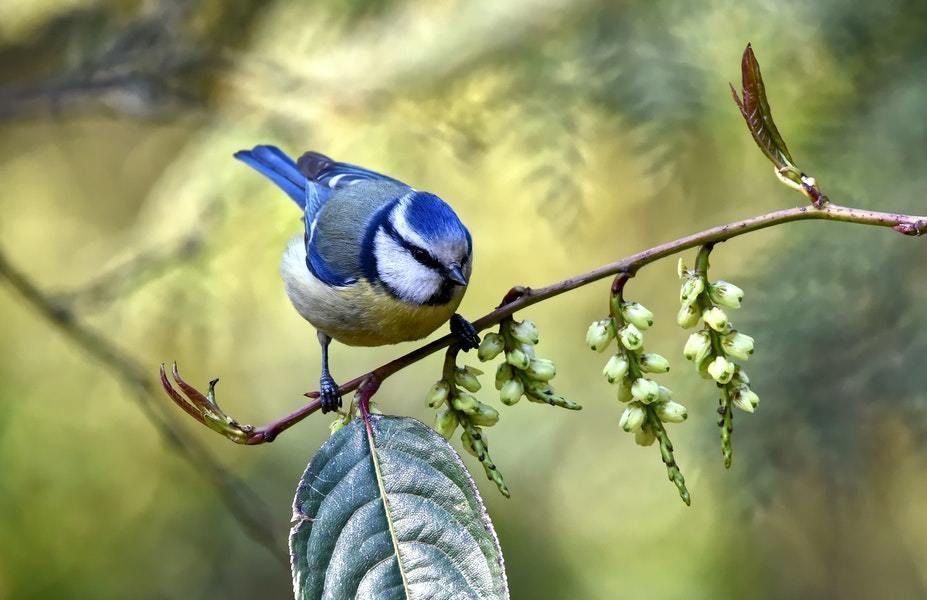 Bird sitting a tree