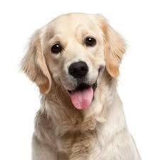 Canine Behavior Handouts