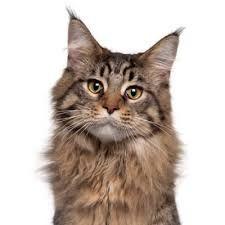 Feline Behavior Handouts