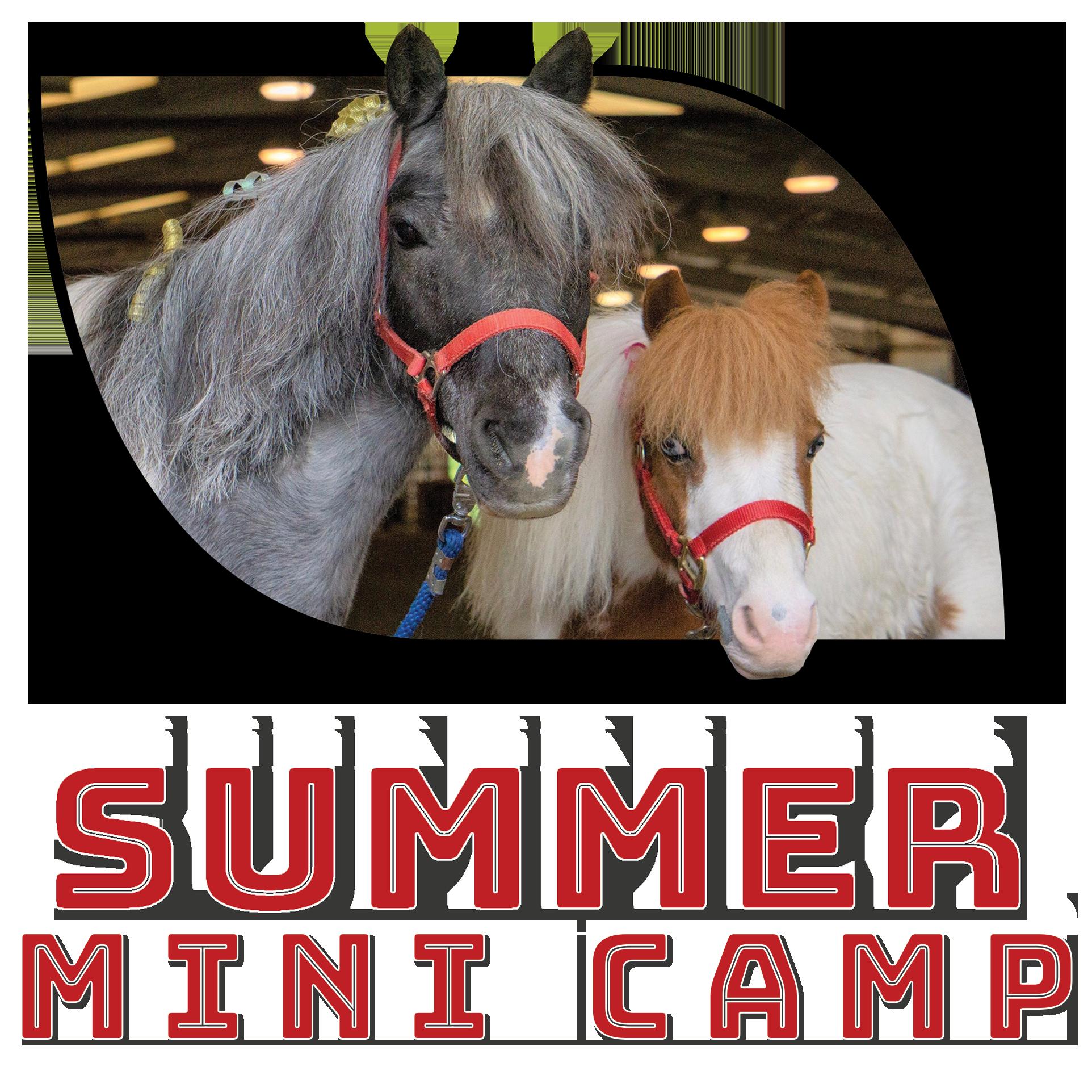 Summer Mini Camps!