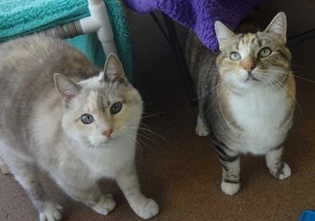 Miss Kitty & Samantha