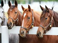Horses & Hops