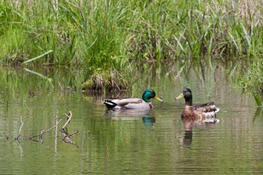 The Pond Community