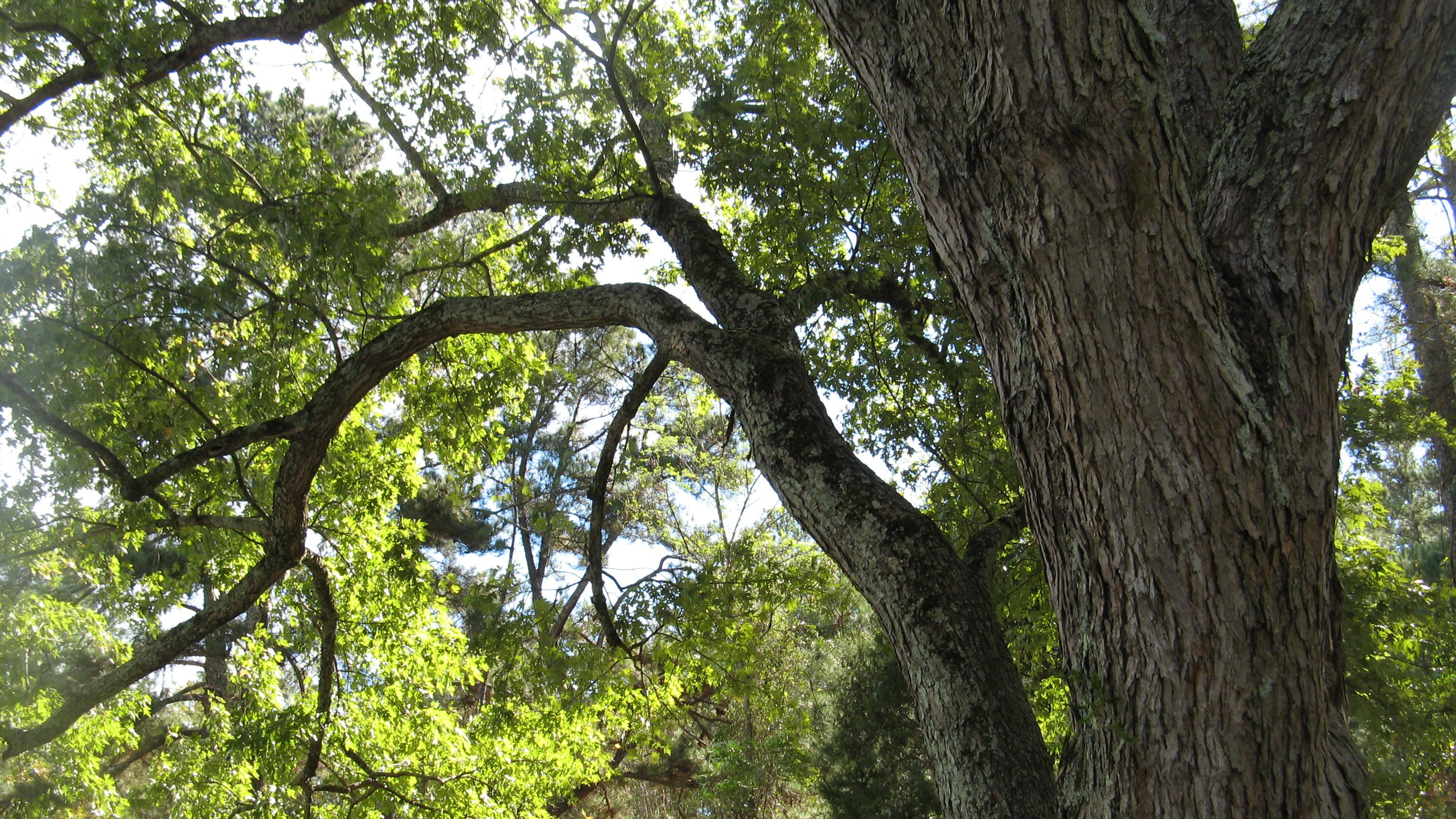 Upcoming Georgia Tree Council Educational Programs